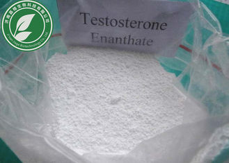 China High Quality Steroid Hormone Testosterone Enanthate for Fat Loss Cas 315-37-7 supplier
