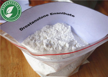 China Muscle Growth Steroid Powder Drostanolone Enanthate CAS 472-61-1 supplier