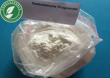 China USP Steroid Powder Testosterone Propionate For Fat Loss CAS 57-85-2 factory